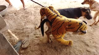 Dog Pranked With Fake Tiger | MUST WATCH 2021