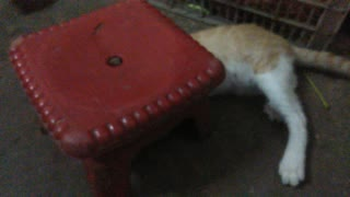 Funny cat like play with a chair