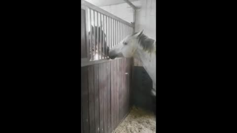 Sweet Horse Feeds His Friend Delicious Hay