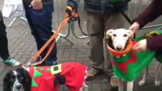 Rescue dog joins in with Christmas carol