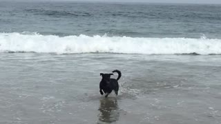 Dog wants to play with surfer - Video