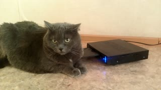Video player massages the cat