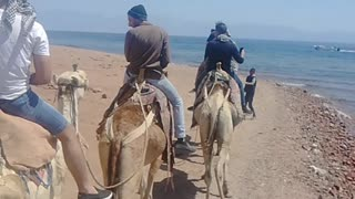 Tourist Records His Adventure In Camel Dahab Beach Walk