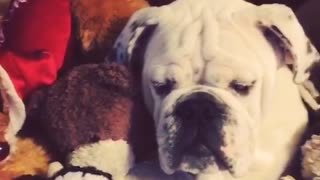 Can you spot the dog in this pile of stuffed animals? - Video