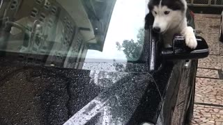Dog Mystified by Moving Window Sticks