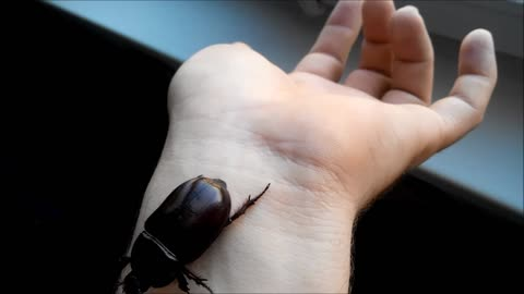 scarab on my hand