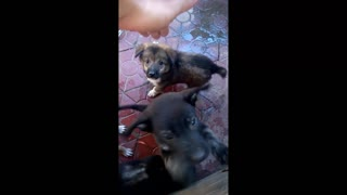 4 brothers cute dog - Video