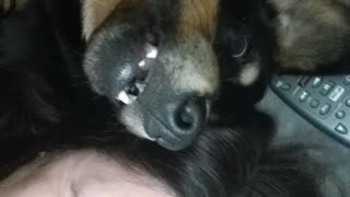 Smiling Dog with Mom