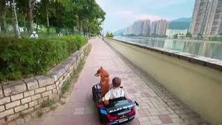 Little boy and his dog go for a relaxing car ride