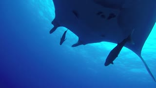 Swimming with Giants  - Video