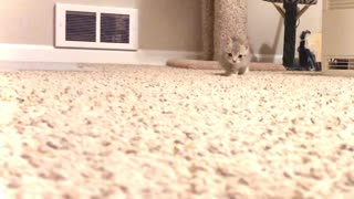 Seriously Cute Kitten Stalks Camera