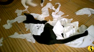 Kitten destroys toilet paper roll, makes gigantic mess!