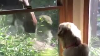 Moose and Dog Become Friends Through Window
