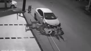 When stray dogs decide to damage your expensive car - Video
