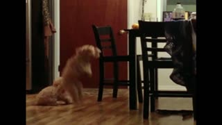 Smart dog shows dumb dog how to steal a treat