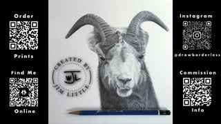 Bighorn headshot drawing time lapse