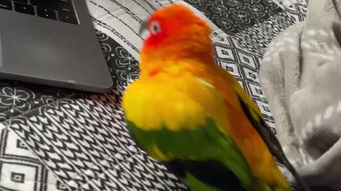 Parrot cant stop attacking computer