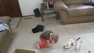 Baby and cat duel for the laser pointer - Video