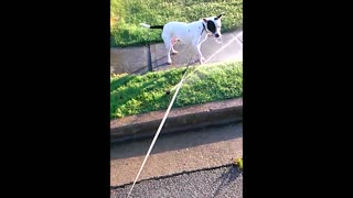Dog Discovers Sprinkler For The First Time - Video