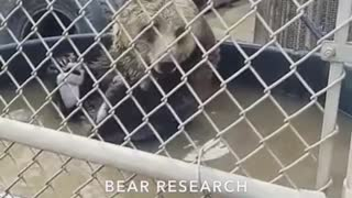 Snapchat bear research and conservation bear inside of dirty water tub