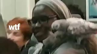 Woman has pet parrot on her shoulder on train
