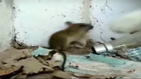 Very funny.Cat hits a mouse