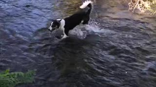 Border collie living his best life  - Video