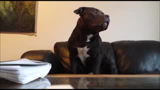 Singing dog loves Justin Bieber songs