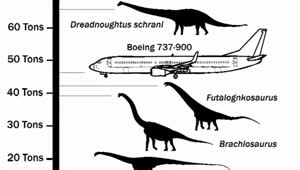 Massive dinosaur 'Dreadnoughtus' discovered in Argentina - Video