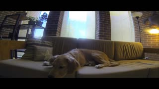 Going inside a puppy's dream - Video