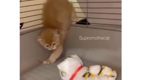Sweet little kitten doesn't want to befriend mechanical toy
