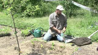 How to Kill Weeds Naturally - Video