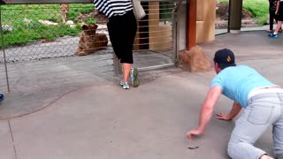 How To Play With Lions At The Zoo - Video