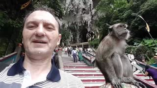 Selfie with macaque goes wrong