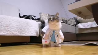 Doctor Kitty
