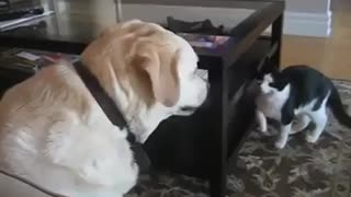 Cat and Dog Play FANNY