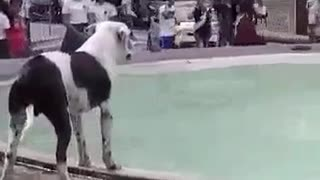 Dog Too Happy To Take Dips In Fountain