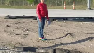 Gator Crosses Highway