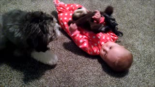 Adorable baby and puppy play with the same toy