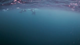 Up Close with Orcas - Video