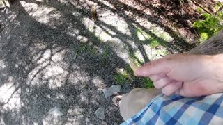 Squirrel climbing up my leg in slow motion to get peanut