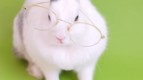 Cute Bunny With Eyeglasses