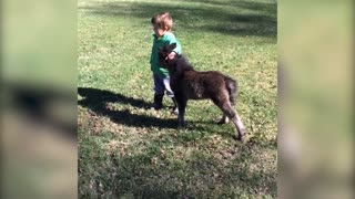 Little Boy Has Playdate With Miniature Horse - Video