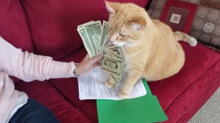 Coolest cat ever loves to count his fat stacks
