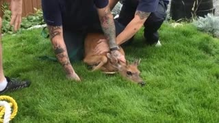 Volunteer Firefighters Save Deer in Backyard on Father's Day - Video