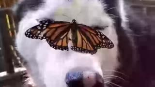 Dog with a Buttlerfly on its Head