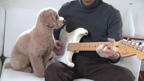 Dog shows off musical talent by strumming guitar