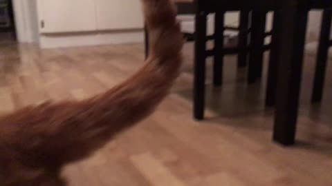 Cat attacks camera and then comes back for more