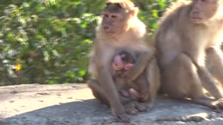 Happy Monkey Family - Video