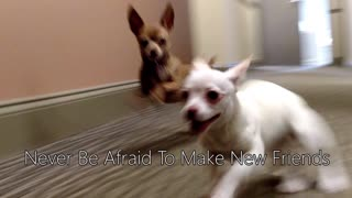 Puppies' first meeting ends in heartwarming experience - Video